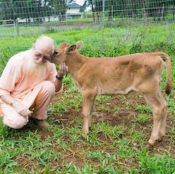 Cow Fund